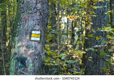 yellow way marking on tree in forest