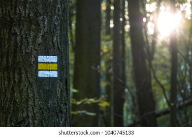 yellow way marking on tree with sunlight