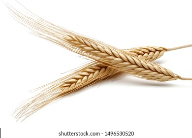 Yellow wheat ears isolated on white background