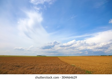 Yellow wheat field agriculture landscape with blue sky and white clouds as summer background