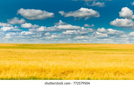 Yellow wheat field on a beautiful day with clouds