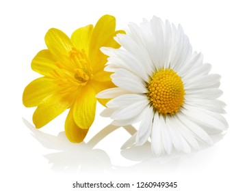 Yellow and white daisies isolated on white background
