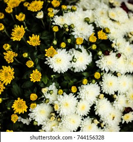 Yellow White Paper Flowers Seamless Background Stockfoto Jetzt