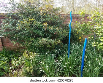 yellow and white flowers in flower bed with blue poles