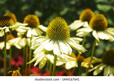 Yellow and white flowers in meadow, close up