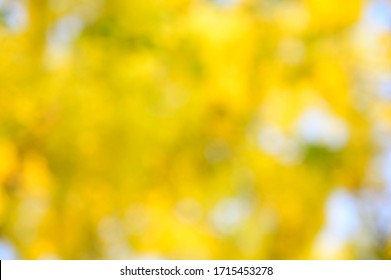 Yellow, white and green bokeh background