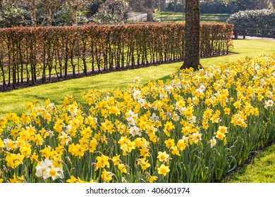 Yellow and white tulips field park