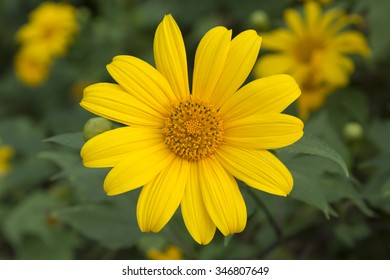 yellow wild flower on sunny day