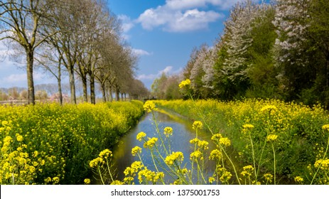 Yellow wild flowers along a ditch with blooming trees and a blue sky in Gelderland in the Netherlands