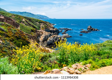 Yellow wild flowers bloom during spring Gorgeous landscape along Northern California Coastline. pacific coast highway view over Pacific Ocean and Big Sur Mountains in background