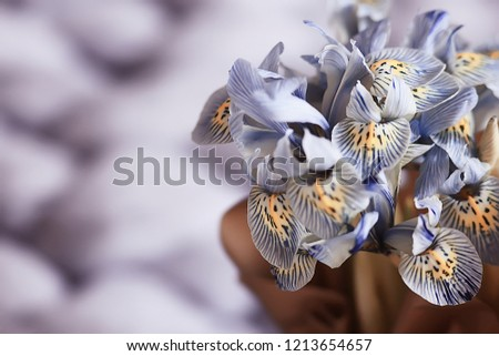 1c392b357ae1 Yellow Wild Flowers Crocuses Bouquet Spring Stock Photo (Edit Now ...