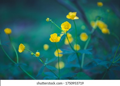yellow wild flowers in forest. High quality photo