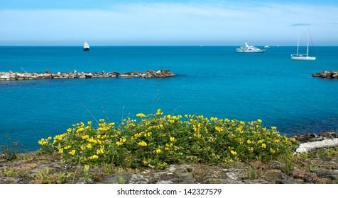 Yellow wild flowers overlooking the Mediterranean Sea. Antibes, France.