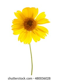 Yellow wildflower isolated on white