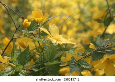 Yellow wildflowers