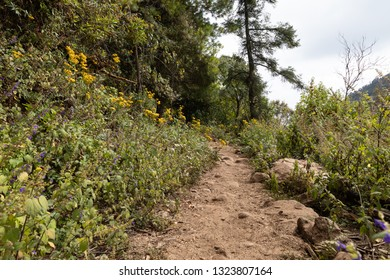 yellow wildflowers line a hiking and horse trail in Carditos, State of Michoacán, Mexico; this trail leads to overwintering monarchs