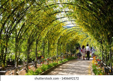 yellow Wisteria tunnel in Japan