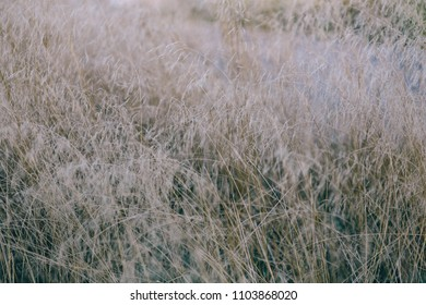 Yellow Withered Grass