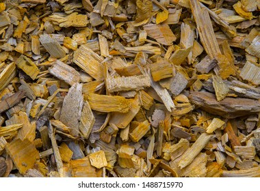 Yellow wood chips used as organic mulch in the garden. Winterization & conservation of soil. Biomass. Bioenergy. Selective focus