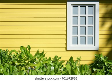 Yellow wooden wall with window and green plant