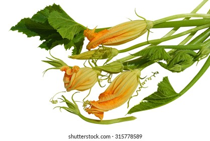 Yellow zucchini blossoms, leaves and tendril on white background