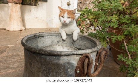 yellow-and-white cat drinking water in old copper pot.