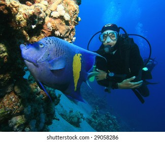 Yellowbar (Arabian) Angelfish and Scuba Diver