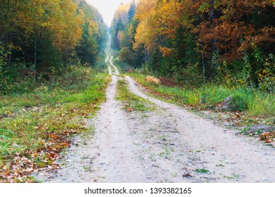 yellowed and reddened leaves of trees, the road in the autumn forest