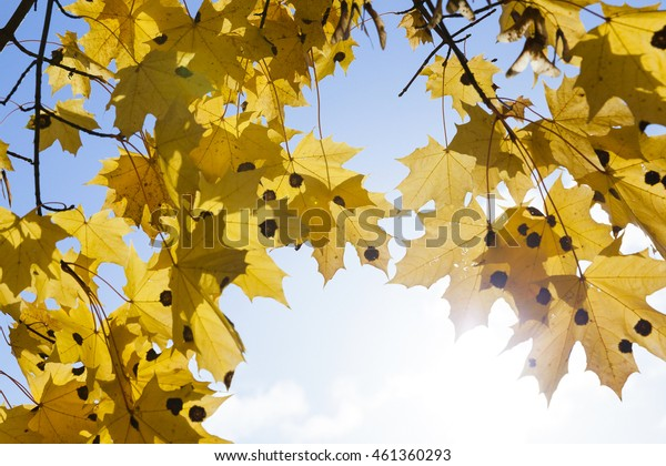 Yellowed trees and nature in the autumn of the year