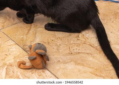 Yellow-eyed black cat with stuffed animal beside it