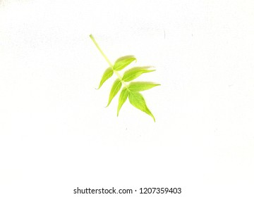 Yellow-green foliage image on white background