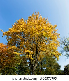 yellowing and color changing leaves on the trees in autumn, nature in autumn