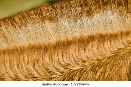 Yellowish hairs of a horse isolated unique blurry photo