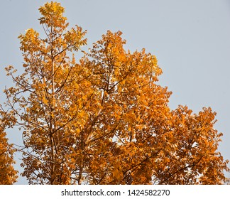 Yellowish leaves of a tree in the autumn season unique photo