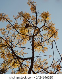 Yellowish leaves of a tree with blue sky background photo