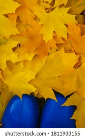 Yellow-orange autumn leaves and blue rubber boots.Maple leaves.