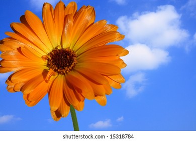 Yellow-orange flower in front of blue sky