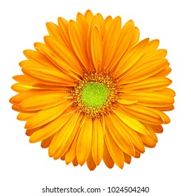 Yellow-orange gerbera flower, white isolated background with clipping path.   Closeup.  no shadows.  For design.  Nature.