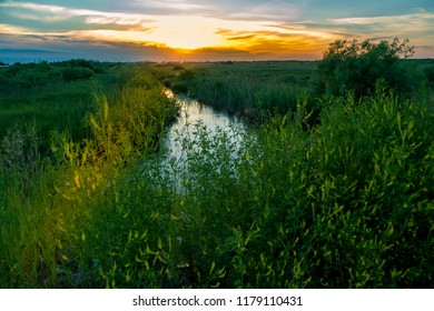 Yellow-orange sunset against the background of a darkening blue sky illuminating a ditch overgrown with green grass
