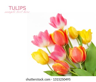 yellow,pink and red tulips bunch isolated on white background with sample text