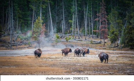 Yellowstone is America's first national park, named after the river that runs through it.