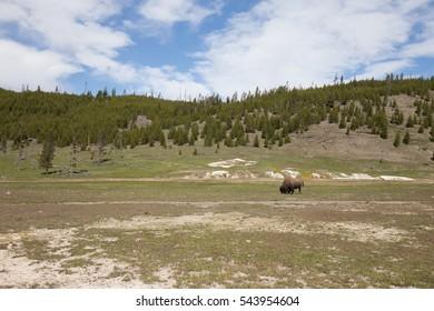 Yellowstone National Park. Wyoming. Geysers