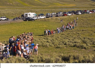 YELLOWSTONE NATIONAL PARK, WYOMING, USA - AUGUST 8, 2007: Crowd of tourists line up to view bears at a kill, in the Hayden Valley.