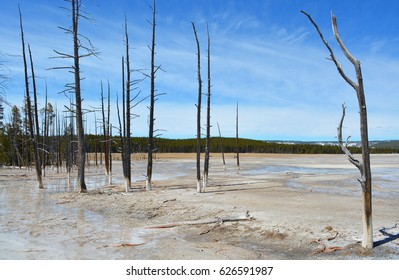 Yellowstone Thermal Field and Dead Trees 2