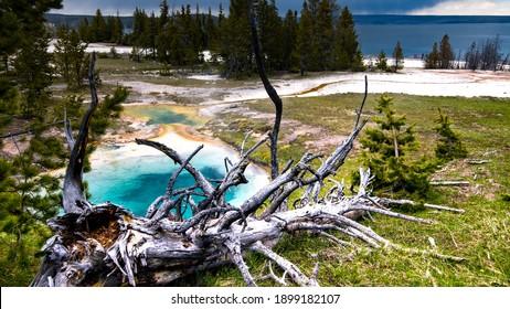 Yellowstone Volcano caldera Bacteria Colors Hot water Geyser