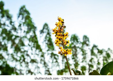 Yeloow flower. Background. Beautiful landscape. Yellow and green.