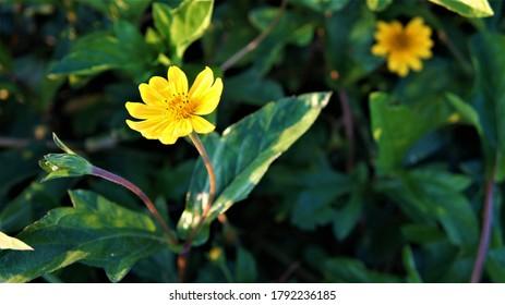 yelow flower green leaves in the sun. - Shutterstock ID 1792236185