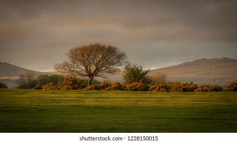 Yelverton veiws to Dartmoor