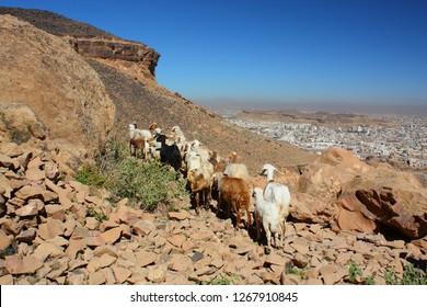 Yemen, the region of Sanaa overlooking the capital city