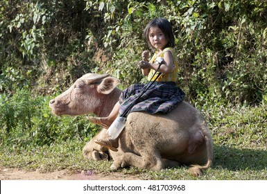 YEN BAI, VIETNAM, June 27, 2016 Girls, Hmong, highland Yen Bai, riding on a buffalo, looking cute
